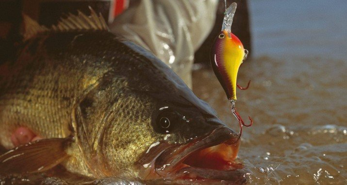 Best Weedless Bass Lures