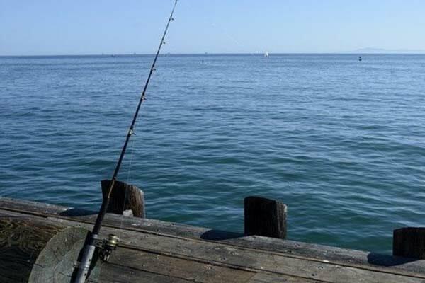 Best Catfish Spinning Reel Of 2020