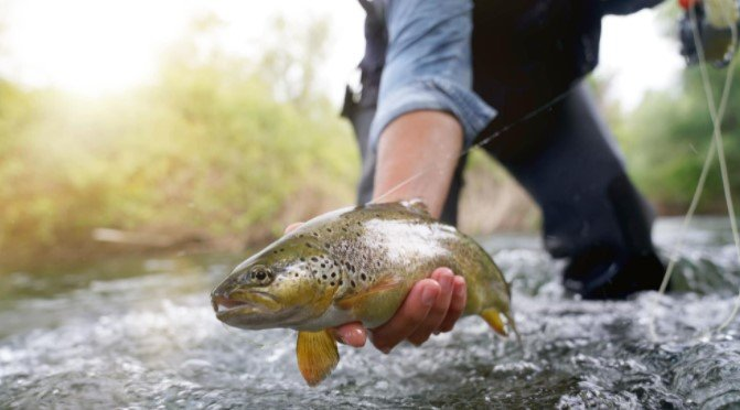 What Is Trout Fishing
